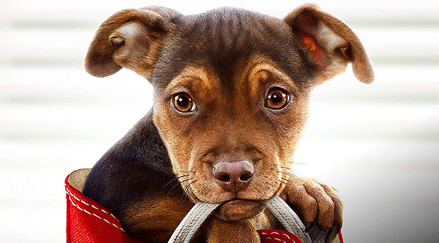 Watch the new trailer for A Dog's Way Home - in cinemas February 28!
