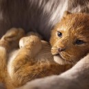 Watch the trailer for Disney's The Lion King - In Cinemas July 18, 2019!