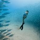 Calling all Ocean Lovers! The Ocean Film Festival World Tour begins next month!