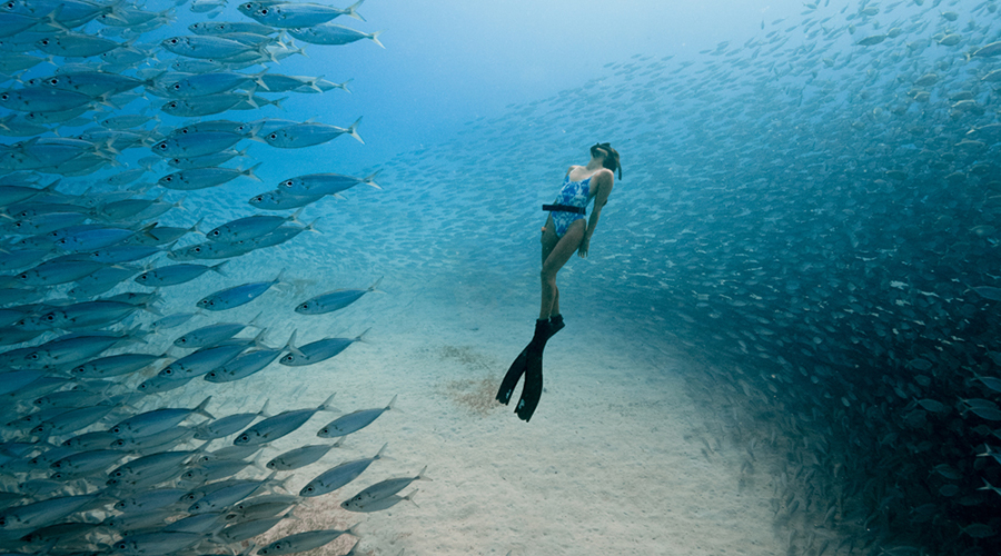 Calling all Ocean Lovers! The Ocean Film Festival World Tour begins next month!