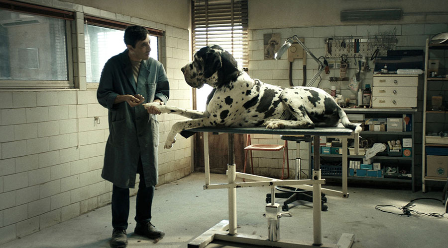 Watch the brand new trailer for the multi award-winning Dogman!