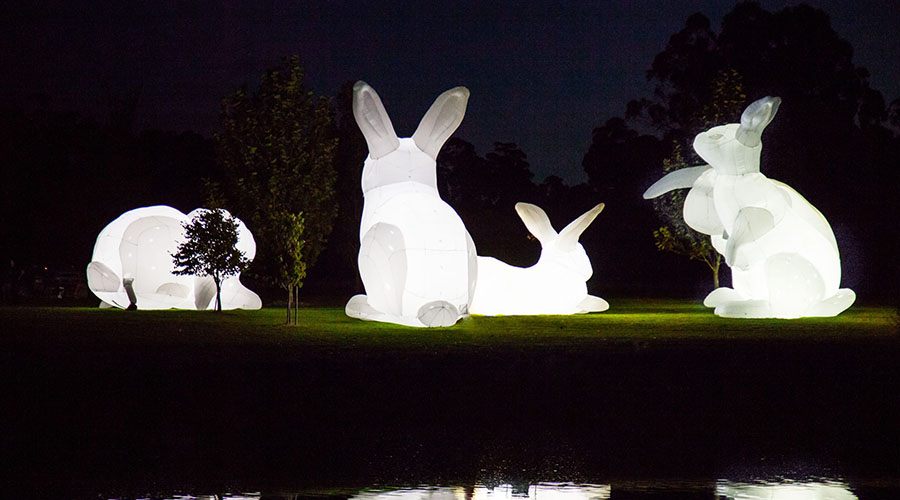 The Bunnies are coming to Brisbane!