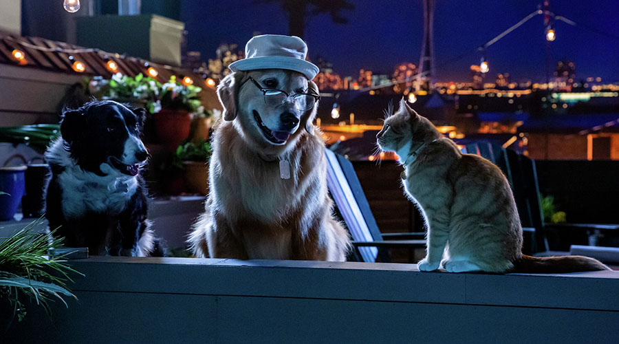 Watch the trailer for Cats & Dogs 3: Paws Unite