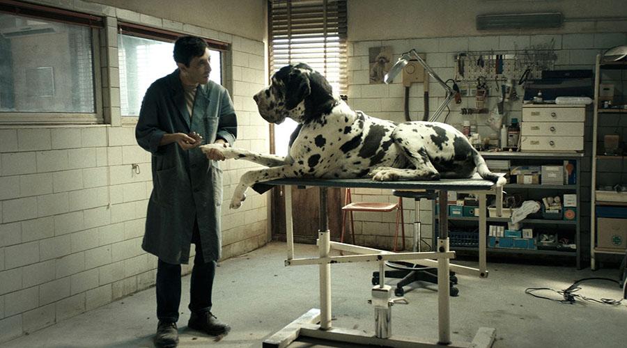 Watch the brand new trailer for the multi award-winning Dogman!